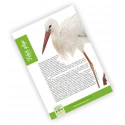 Fehér gólya (9.1.1.)
