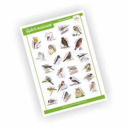 Gyakori madarak 1 (9.2.8.)